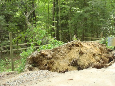 Blown-over-tree-on-Maybrook-Road