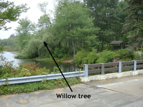 Willow tree that was behind the Anchor and bridge